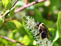 蜂和花有绿色背景 免版税库存照片