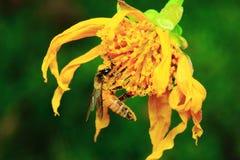 蜂和花 免版税库存图片