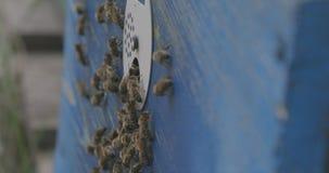 蜂和蜂房从一边