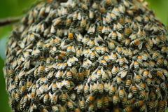 蜂和蜂窝 图库摄影