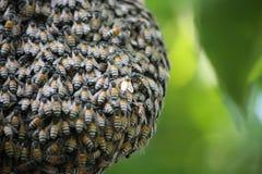 蜂和蜂窝 库存照片
