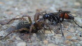 黄蜂和蜘蛛 影视素材