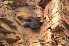 蜂在小山的` s巢在Tirathgarh瀑布 库存图片