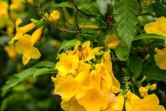 蜂在庭院公园 免版税库存图片