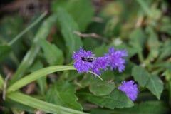 蜂在庭院里 免版税图库摄影