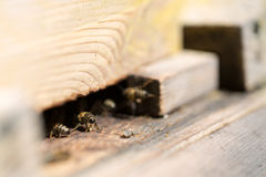 蜂在房子里 库存图片