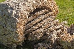 黄蜂巢 库存照片