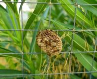 黄蜂巢 图库摄影