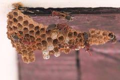黄蜂巢 库存图片