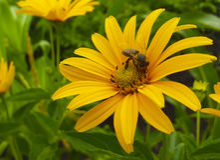 蜂工作者 库存照片