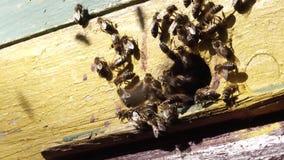 蜂工作飞行过程花花蜜入蜂蜜 股票录像
