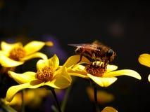 蜂工作 库存照片