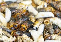 蜂幼虫 免版税库存照片
