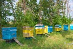 蜂庭院 免版税库存照片