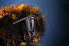 蜂弄糟详细极其锋利的研究 库存照片