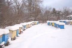 蜂房冬天 库存图片