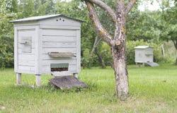 蜂房在庭院里 库存图片