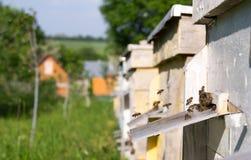蜂房在庭院里 免版税库存照片