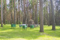 蜂房在森林 项 的根底 免版税图库摄影