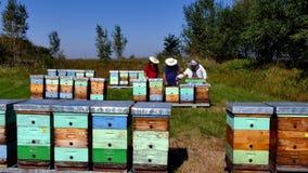 蜂房在草甸 影视素材