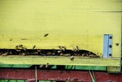 蜂房在草甸 库存图片