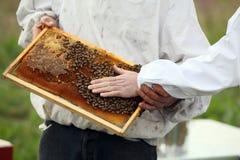 蜂房框架 库存图片
