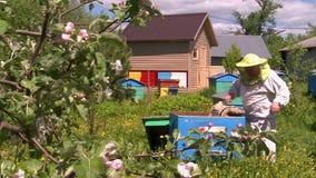 蜂房的蜂农 股票录像