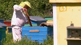 蜂房的蜂农 影视素材