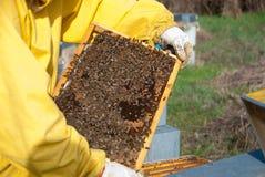 从蜂房的蜂农 库存图片
