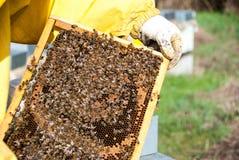 从蜂房的蜂农 免版税库存照片