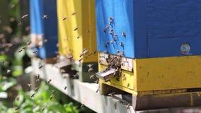蜂房,蜂群在入口的对蜂房 影视素材