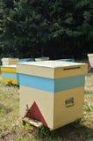 蜂房 库存照片
