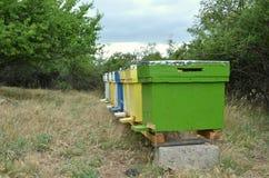 蜂房 图库摄影