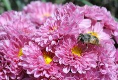 蜂收获在11月 库存图片