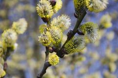 蜂收集花粉 免版税图库摄影