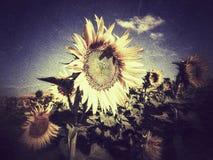 蜂明亮的中心花晚夏星期日向日葵黄色 免版税库存图片