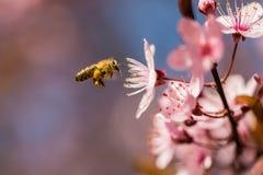 蜂服装小飞行的女孩 免版税库存照片