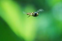 蜂服装小飞行的女孩 免版税库存图片