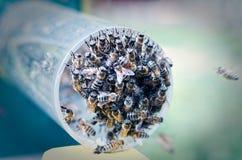 蜂殖民地,当哺养在垂悬对蜂房的入口的时管子 库存图片