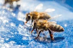 蜂用甜食物在夏天 免版税库存图片