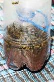 黄蜂的自创陷井 库存图片