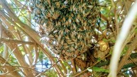 蜂的 免版税库存图片