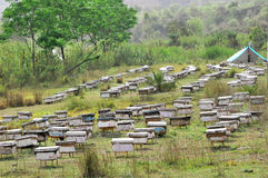 蜂种田 库存照片