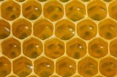 蜂窝、花蜜和光从它的表面反射了 库存图片