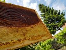 蜂窝在春天 免版税图库摄影