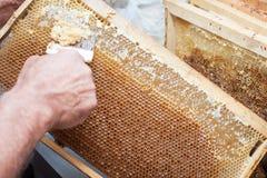 蜂窝将打开为收获非常有趣的蜂蜜开盖的unwaxing的叉子蜂农 免版税图库摄影