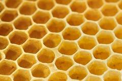 蜂窝甜黄色 免版税库存图片