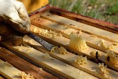 从蜂窝的蜂农刮的蜡 库存图片