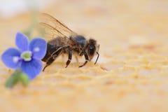 蜂窝空和有很多蜂蜜 免版税图库摄影