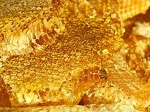 蜂窝表面上的蜂 免版税库存照片